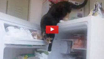 Scoprono chi è che ruba il cibo dal frigo e rimangono senza parole [VIDEO]