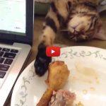 Gatto finge di dormire pur di mangiare la coscia di pollo [VIDEO]