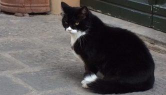 Lucca piange Rollo, lo storico gatto amatissimo in città