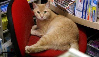 A Sesto Fiorentino tutti pazzi per Nando, il gatto edicolante