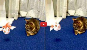 Leggenda giapponese: anche i gatti possono vedere i Pokemon