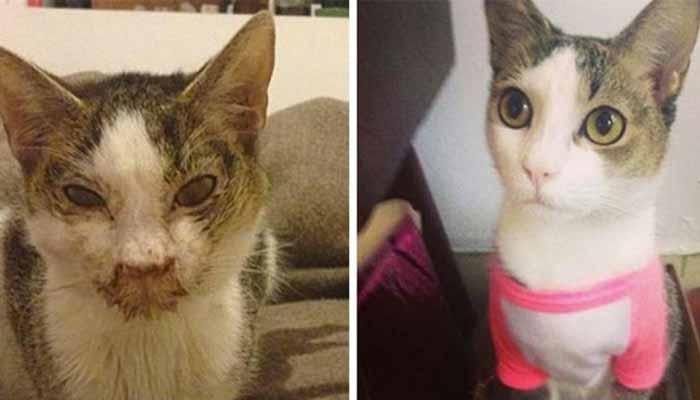 Gatti randagi prima e dopo l 39 adozione for Youtube cani e gatti