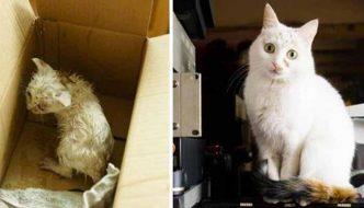 Gatti randagi prima e dopo l'adozione