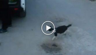 Terremoto Accumoli: gatta porta cibo ai suoi cuccioli tra le macerie [VIDEO]