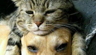 Cindy, la gattina sopravvissuta grazie a un cane randagio
