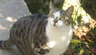 La storia di Tilly, la gatta che ha salvato i suoi umani da un incendio
