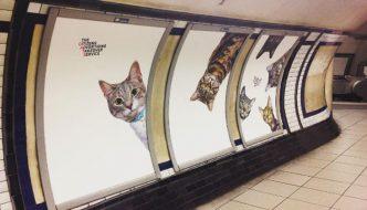 La stazione della metro di Londra è stata invasa dai gattini