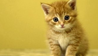 Salvo per miracolo il gattino lanciato da un'auto in corsa