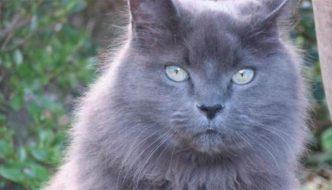 Il gatto Moubli, scomparso nel 2005, ritrova la sua umana!