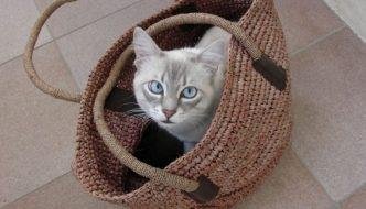 Orrore su TradeMe: gatto imbalsamato diventa una borsa!