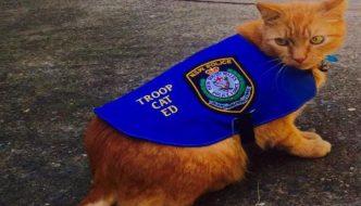 Ecco Ted, il gatto poliziotto che acciuffa i topi
