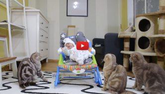Cinque gatti incontrano per la prima volta il neonato di casa [VIDEO]