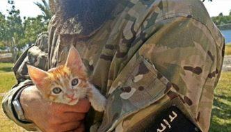 L'Isis vuole sterminare i gatti con una legge