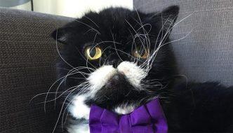 Kyle è il gatto con i baffi più buffi del mondo!