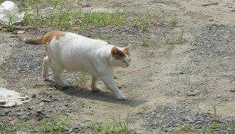 La strana storia del gatto fantasma giapponese