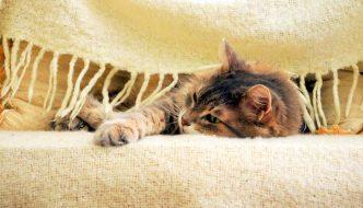 Sta per arrivare l'inverno: prepariamoci a passarlo insieme ai nostri gatti!