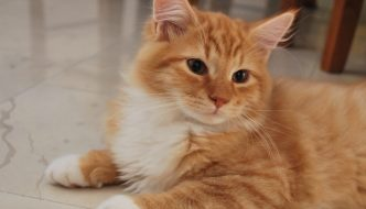 La storia di Nanà, il gattino salvato da un incidente stradale