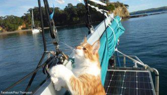 Il gatto Skatty ha aiutato il suo umano sordo ad andare in barca a vela