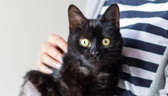 Tuck, il gatto investito da un treno ha chiesto aiuto per essere salvato