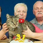 Con i suoi 31 anni è Nutmeg il gatto più vecchio del mondo