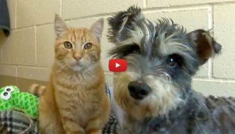 Romeo e Giulietta, un cane e un gatto innamorati in un rifugio