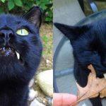 La dolcezza di Sergio, il gatto vampiro