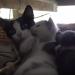 Mamma gatta e i suoi dolcissimi gattini [VIDEO]