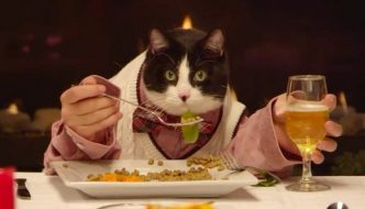 Gatti a tavola: consigli per una corretta alimentazione!