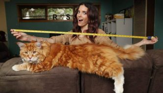 Omar 120 centimetri di gattosità!!