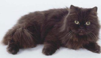 I gatti e la diversità del loro pelo