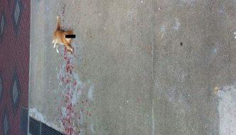 Passante vede un gatto in condizioni disperate ma trova una sorpresa