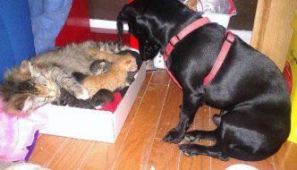 Mamma gatta partorisce 7 mici e il cane di casa diventa il loro papà