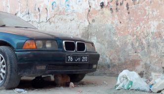 Il mio incontro con Tunisi, una città a misura di gatto