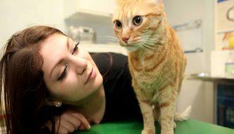 Brandy, il gatto salvato a San Valentino al Trotter di Milano