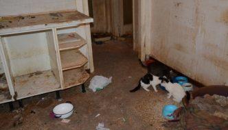 30 gatti a Pavia rinchiusi per giorni, finalmente liberati