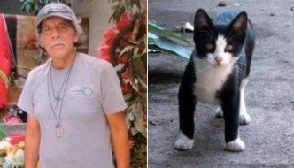 Senzatetto muore e il quartiere decide di adottare i suoi 30 gatti