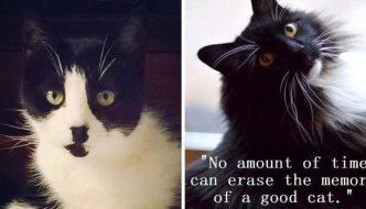 Perdere un gatto è come perdere un membro della famiglia, ecco perchè.