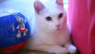 Ecco Achille, il gatto veggente del Mondiale 2018
