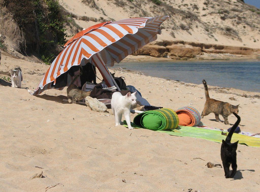 gatti spiaggia