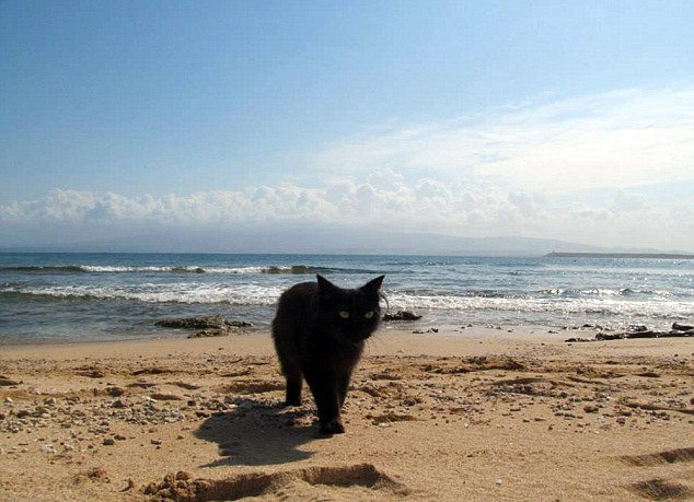 gatto spiaggia