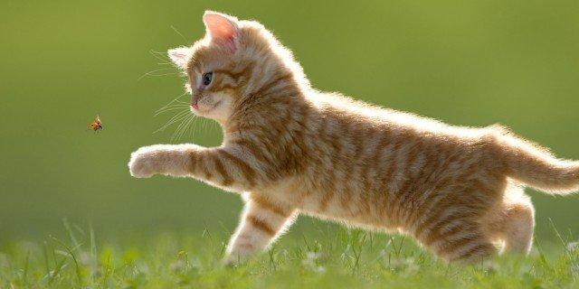 Le 10 poesie più belle dedicate ai nostri amici gatti