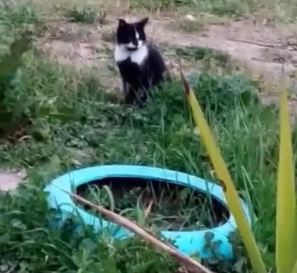 fabbrica gatto Roma