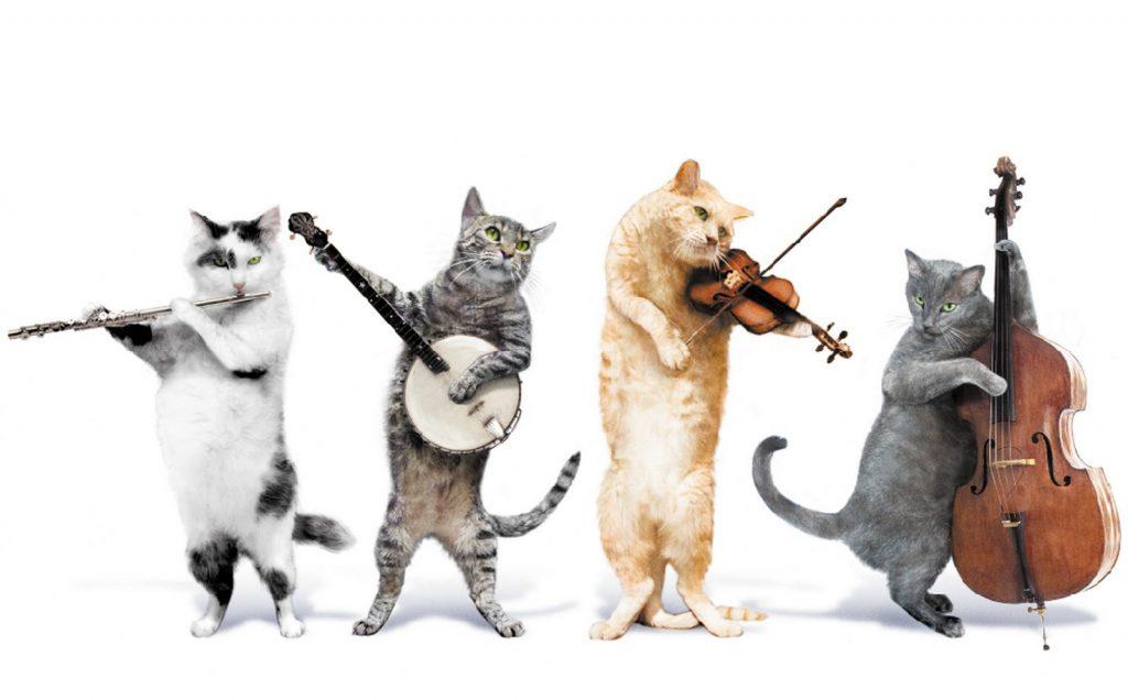 gatti musica