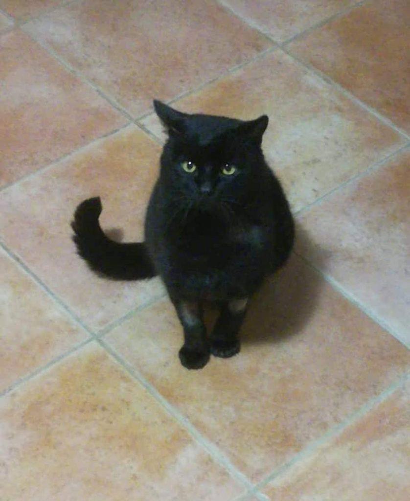 pedro gatto nero