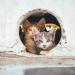 Gatto organizza evasione dal gattile e fa scappare anche i suoi amici