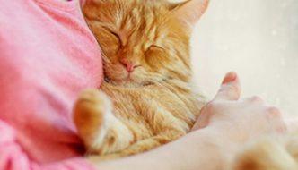 benessere gatto