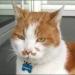 Ferrara tutta dà l'ultimo saluto all'amato gatto Jerry