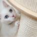 7 miti da sfatare riguardo i gatti