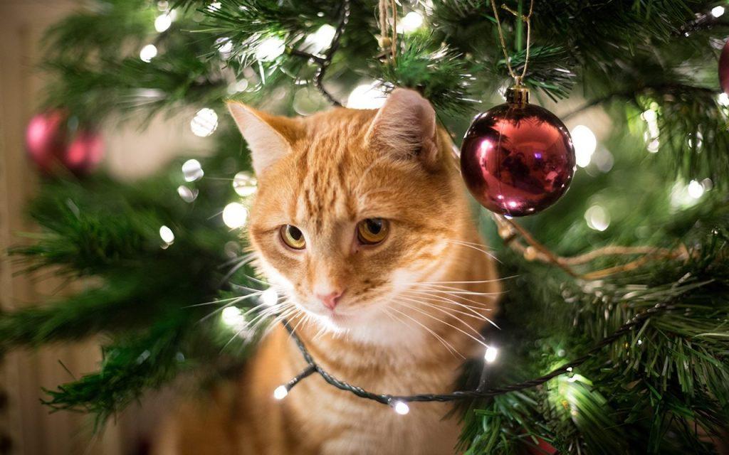 albero natale gatto