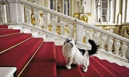 gatto ermitage